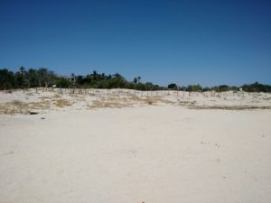 Beachfront property (20)